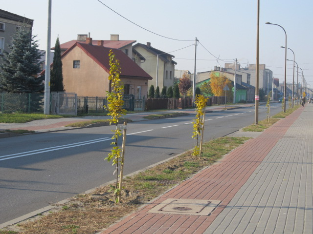 Nasadzenia drzew przy drogach Powiatu Wieruszowskiego - jesień 2011
